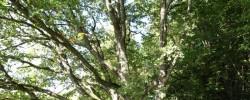 Išskirtiniai mūsų miškų medžiai