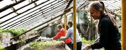 Svarbiausias  sodininko darbas rudenį – tinkamai paruošti dirvą žiemai
