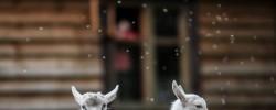 """""""Avinėlio vartai"""" – filmas apie Krikšto sakramentą"""