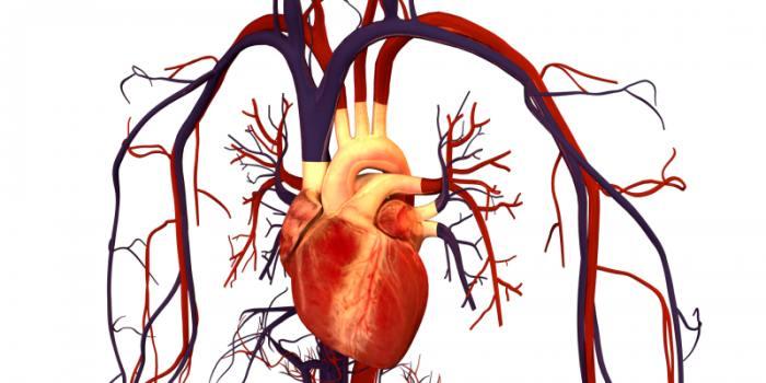 kraujotaka ir širdies sveikata