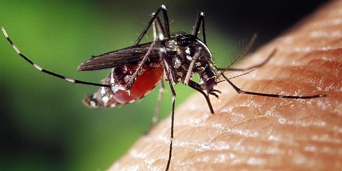 Grėsminga statistika: Lietuvoje nuo vabzdžių įgėlimų per metus nukenčia apie 10 tūkst. žmonių