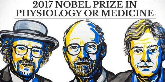 2017-ųjų Nobelio medicinos laureatais tapo cirkadinio ritmo mechanizmą tyrę amerikiečiai
