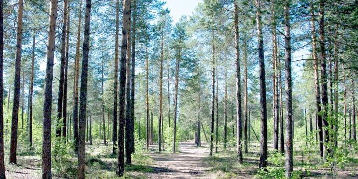 Norintieji paramos miškams atkurti turėtų suskubti