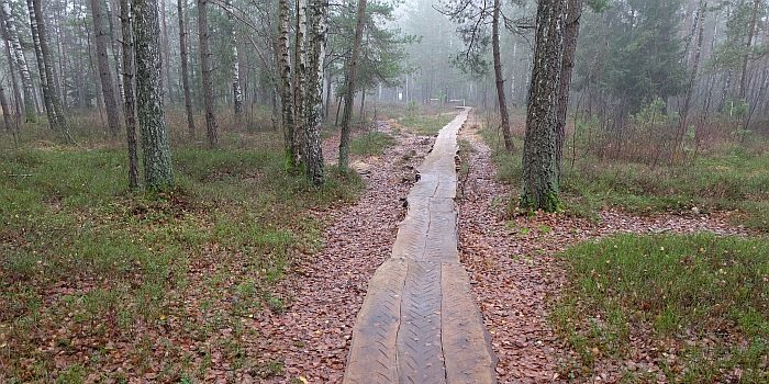 Per Velniabliūdžio pelkę – naujas medinis takas